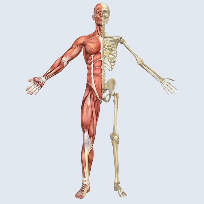 Az ortopédia területe: a mozgási szervrendszer