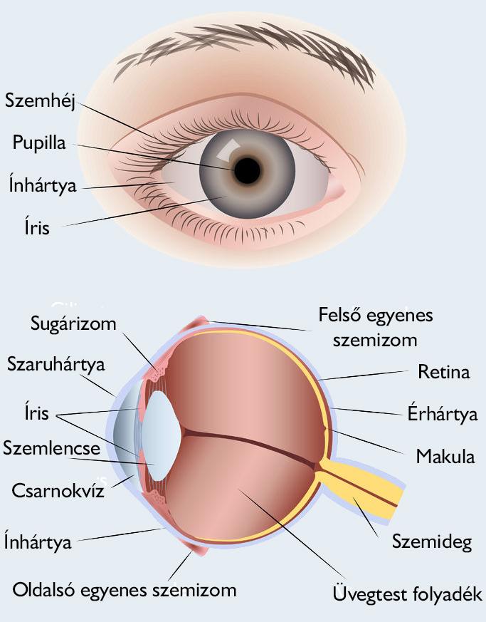a látás csökken, hogyan kell kezelni az életkorral összefüggő távollátás és rövidlátás